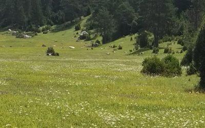 La primavera para los alérgicos al polen