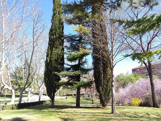 Altos niveles de polen de ciprés