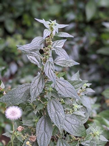 La primavera 2020 para los alérgicos al polen